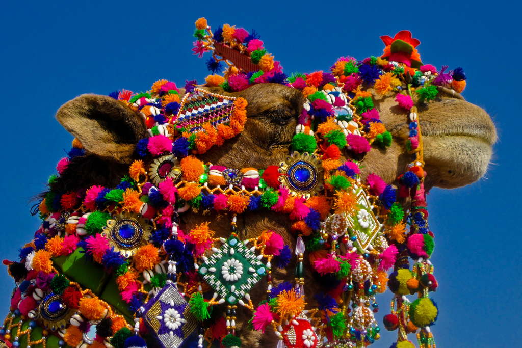 Desert Festival -1, Jaisalmer