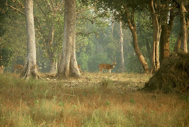 With a dense area of bamboo forest, Kanha National Park (Madhya Pradesh) in India is the ultimate destination to spot the Bengal tiger, leopard, sloth bear, and wild dog. Exploring one of the finest national parks of India is full of fun and adventure Image from - WikiPedia