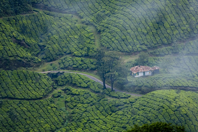 Munnar-Kerala-top-honeymoon-destination