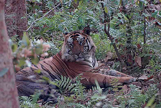 Bandhavgarh National Park-Tourist Places In Madhya Pradesh