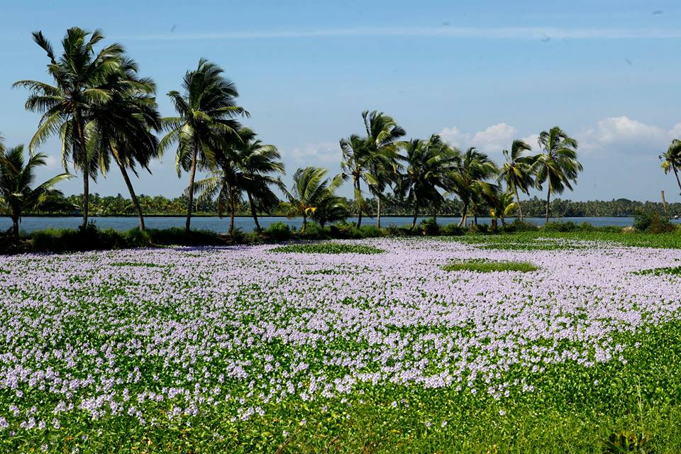 Travel to Kochi - Experience That Makes You Happy